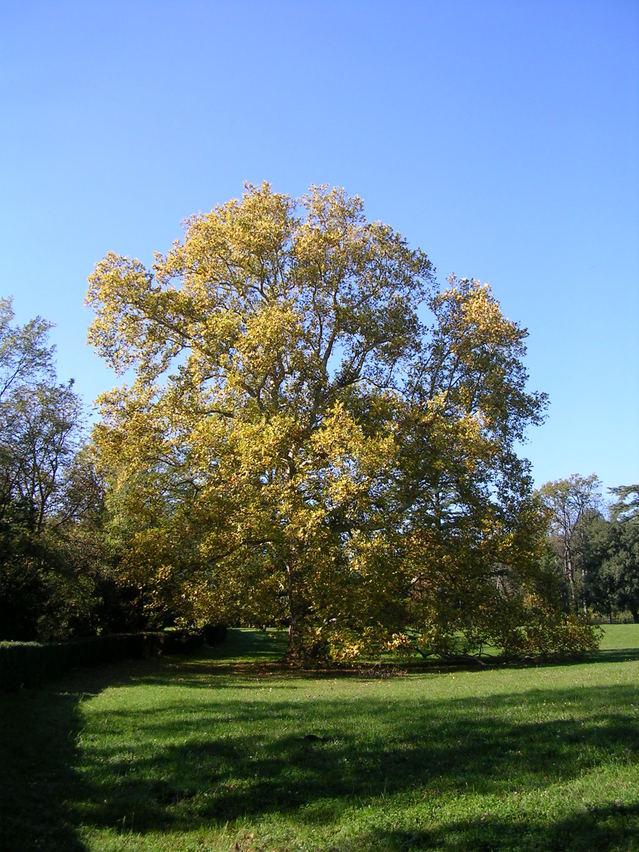 tree-1400027-639×852